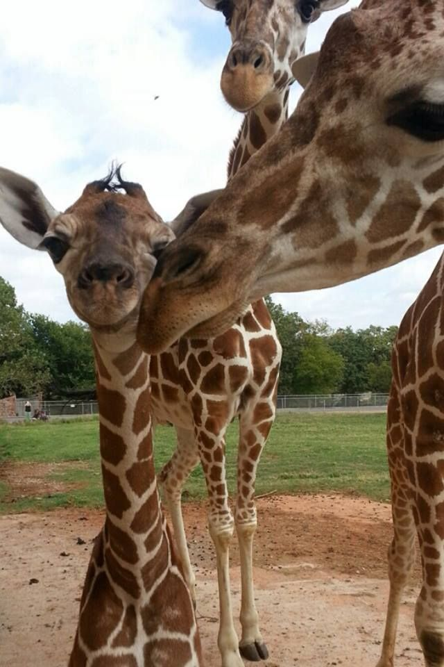Oklahoma city zoo and botanical garden oklahoma city zoo Oklahoma city zoo and botanical garden