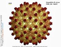 Penyakit Hepatitis B