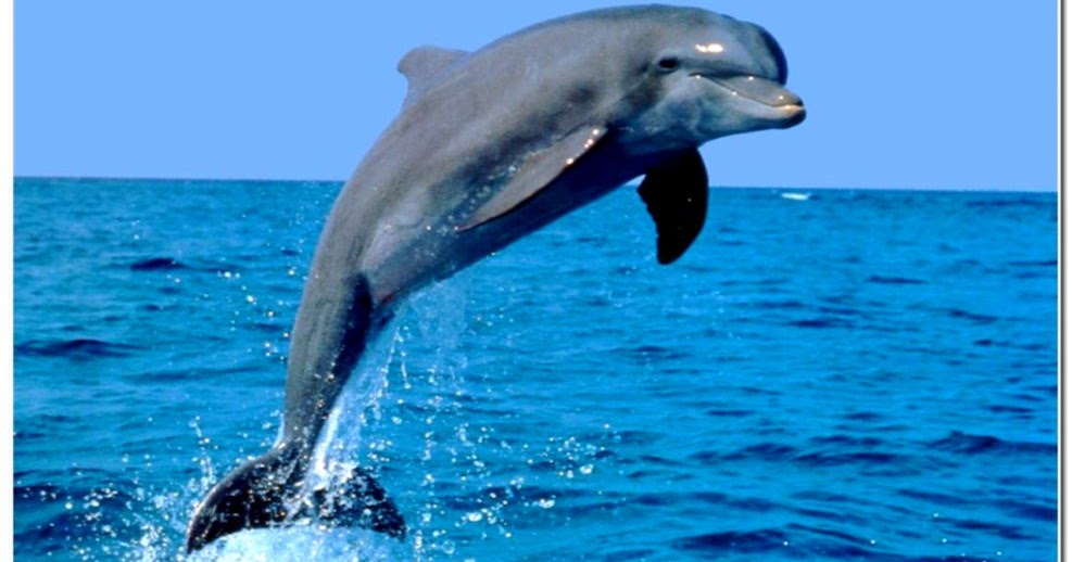 really cute baby dolphins amazing wallpapers