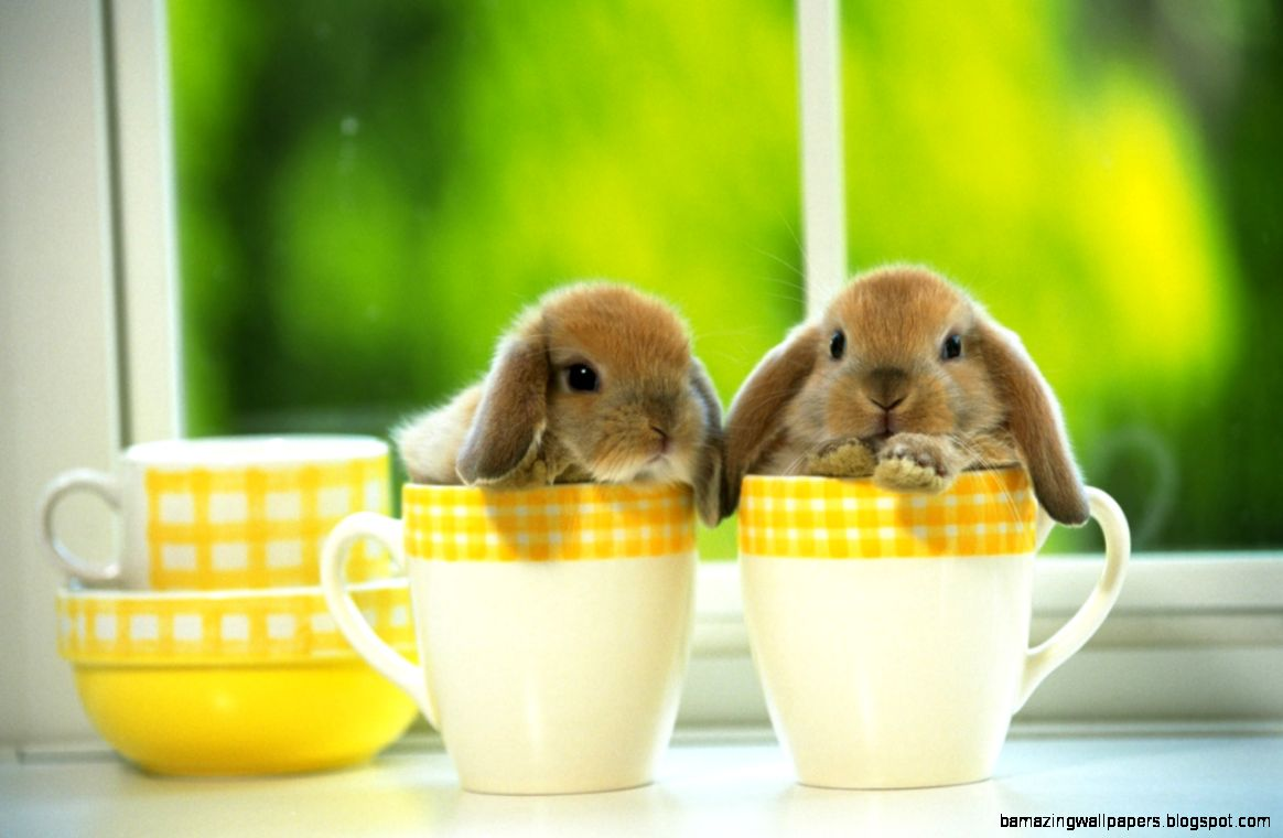 Cute Baby Bunny Wallpapers Widescreen 2 HD Wallpapers