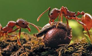 Ants In Garden Soil