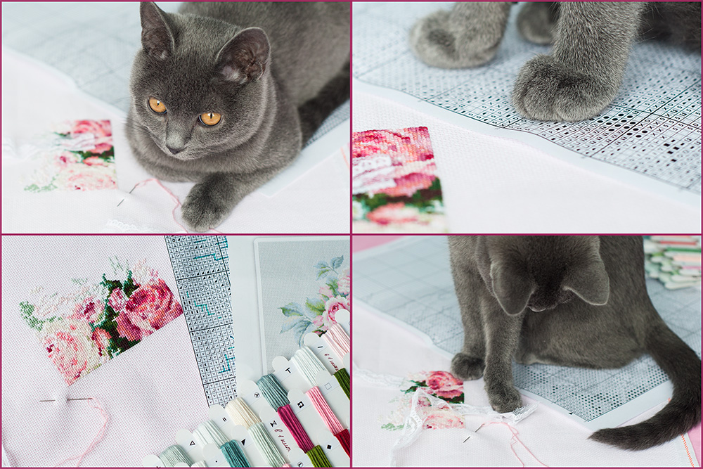 кот вышивает, вышивка розы, вышивка кот веселье
