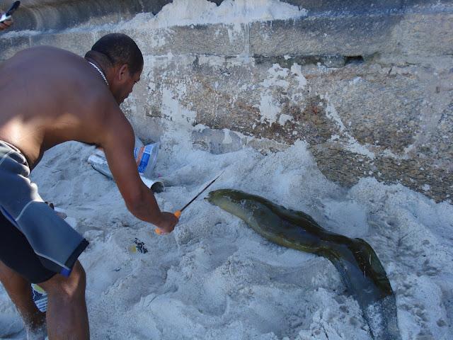 Moréia caçada em Ipanema/Foto: Marcelo Migliaccio