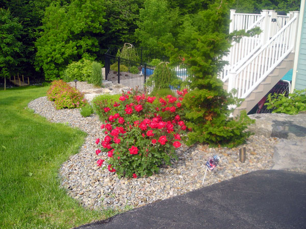 1000 images about deck plants on pinterest evergreen for Landscape rock delivery near me