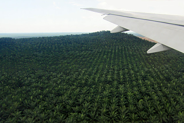 palm plantations of malaysia wide expanse