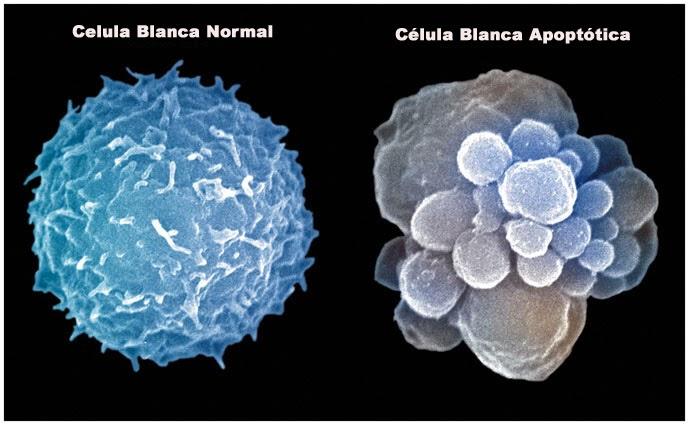 células de nuestro organismo se suicidan