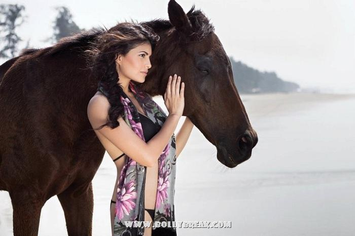 Jacqueline Fernandez with black horse - (4) -  Jacqueline Fernandez Photoshoot - Latest HOT Pics