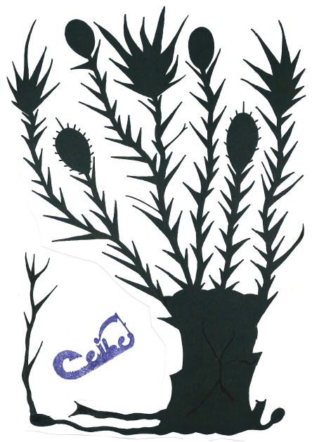 Árbol Ceibe