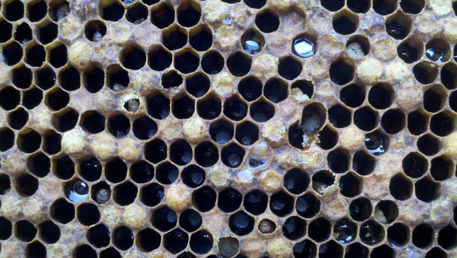 Terramycin Dosage For Bees