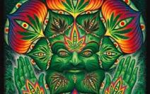 Cannabis et Bible