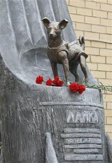 Laika III - [www.zootodays.blogspot.com]