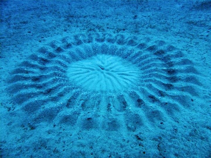 Les cercles dans le sable du mer