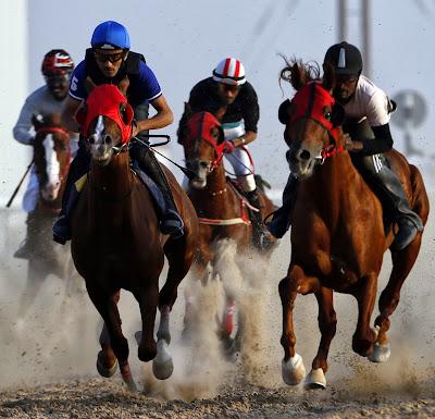 Abu Dhabi, Purebred, Arabian, Horse Race, Sports, UAE, Mazayin, Dhafra, Camel, Festival, Gulf, Tourism, Desert, Folklore, Promotion, World, Economy, Agriculture, Jockey, Animal,