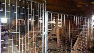 inside barn animal housing