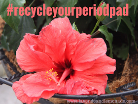 Water Patio Plants Less Often with this Surprising Tip! #recycleyourperiodpad