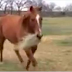 Horse Brings His Girlfriend A Snack