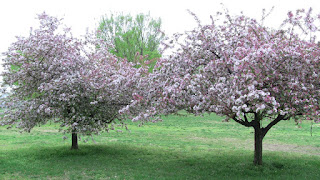 Symbolab spring