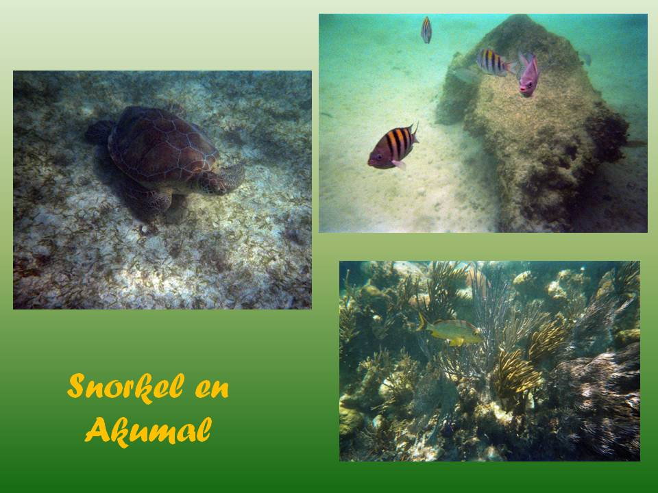 Snorkel en Akumal