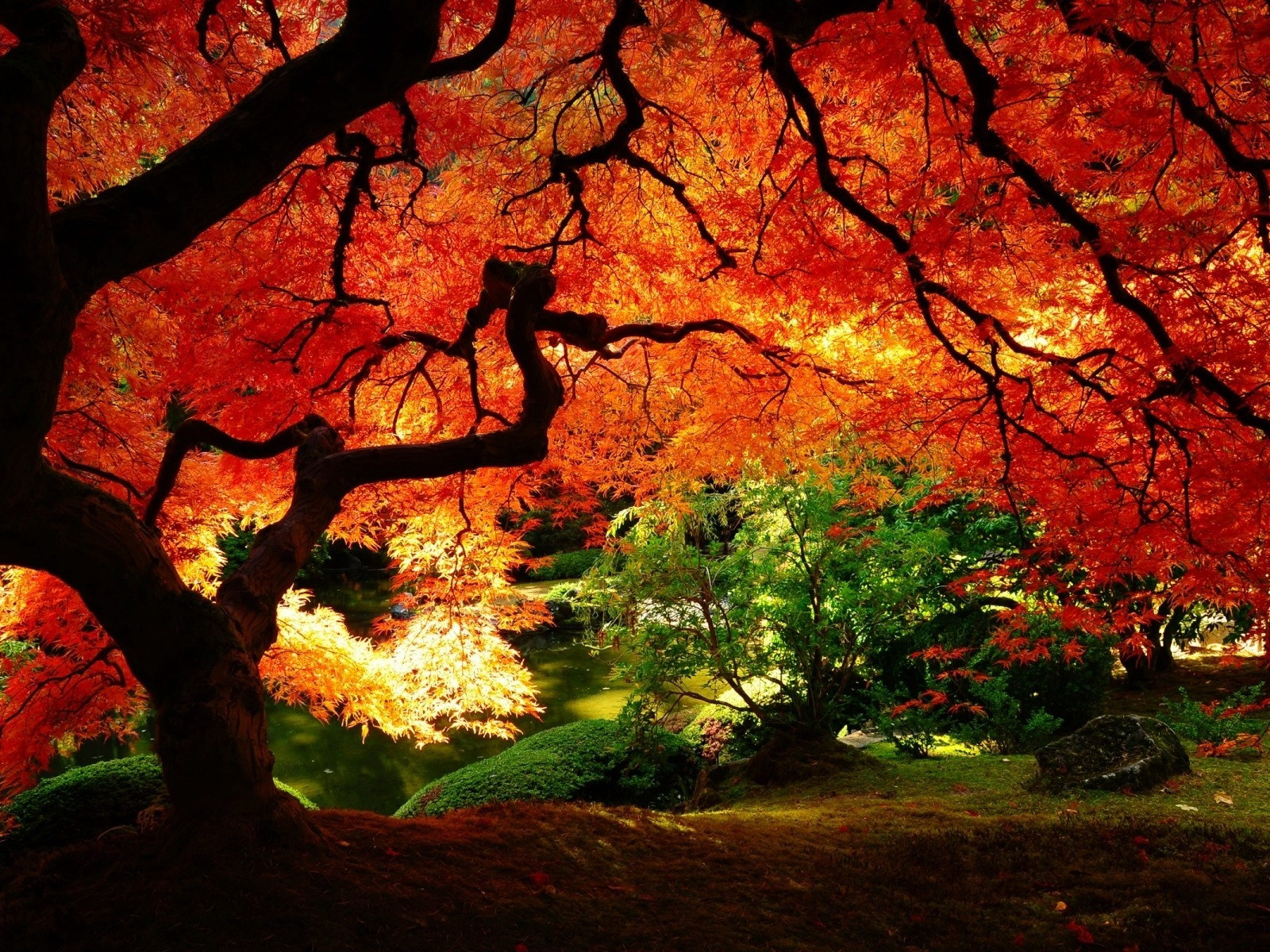 Tree in Autumn || Top Wallpapers Download .blogspot.com