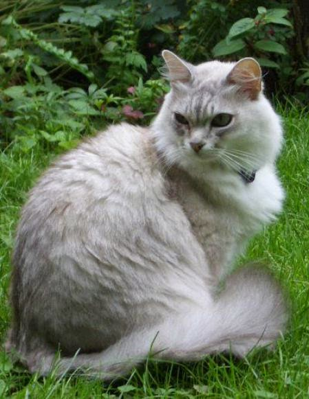 The 5 Most  Prolific Cat Breeds