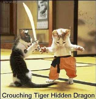 This is what i call Cat Fight!