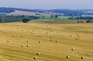 India and Lithuania agree to intensify Agricultural ties