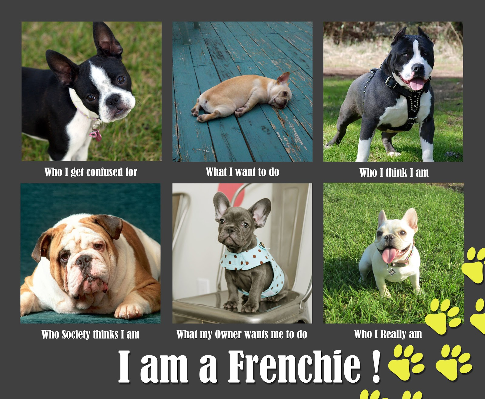 Funny French Bulldog Meme