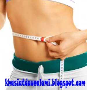 obat tradisional mengurangi lemak perut