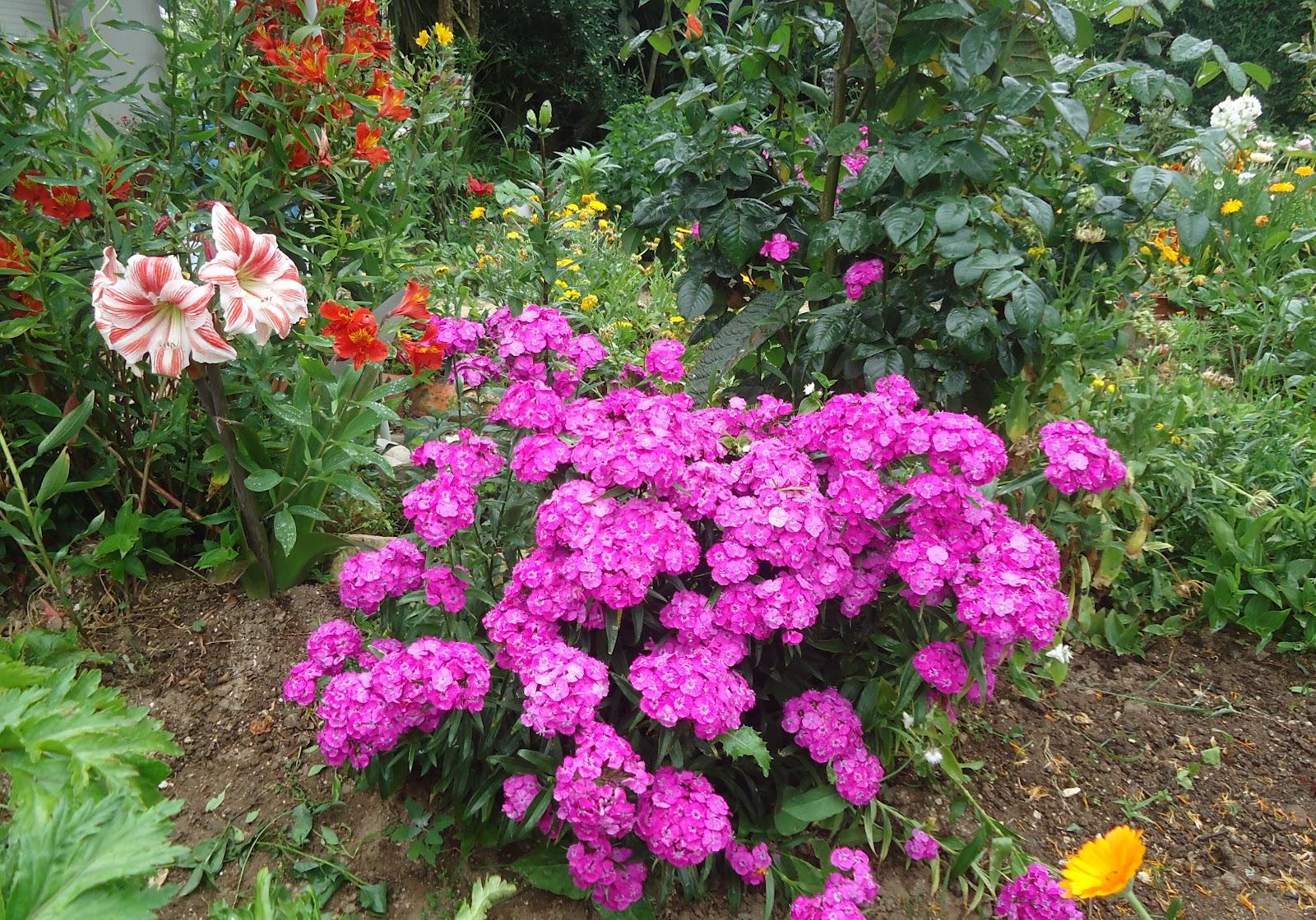 minha Horta Biológica Jardim da Celeste num dia de chuva tropical