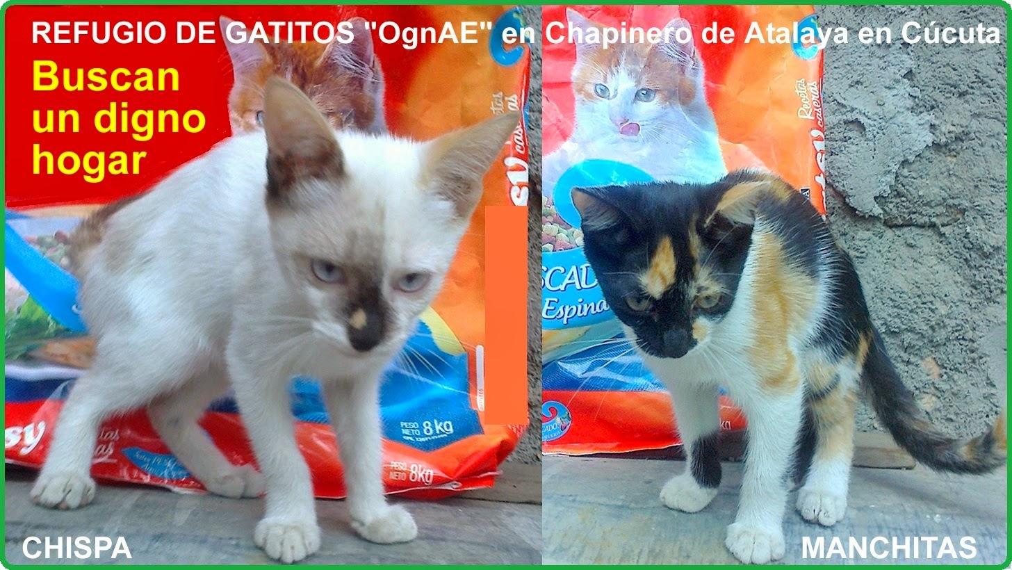 Bienvenidos al #RefugioOngAE por ahora de gatitos en Chapinero de Cúcuta-Colombia #VoluntariadoOngAE #MovilNOTICIAS