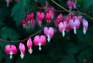 Fotos de Flores Exoticas y Tropicales Heliconias Follajes  - Imagenes De Flores Exsoticas