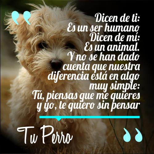 Dicen de ti: Es un ser humano Dicen de mí: Es un animal, Y no se han dado cuenta que nuestra diferencia está en algo muy simple: Tú, piensas que me quieres y yo, te quiero sin pensar