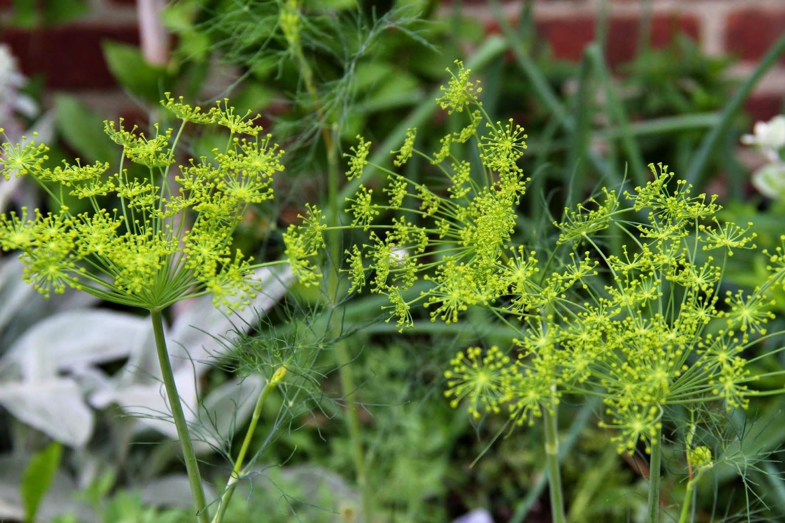 Plante qui aime le soleil le galement appel cactus de nol est une jolie plante grasse qui - Plante qui aime le soleil ...