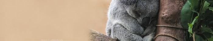 https://addons.mozilla.org/en-US/firefox/addon/sleeping-koala/