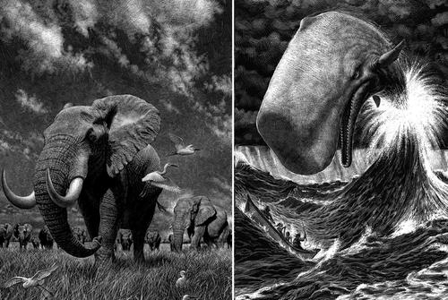 00-Ricardo-Martinez-Wild-Animals-inside-Scratchboard-Drawings-www-designstack-co