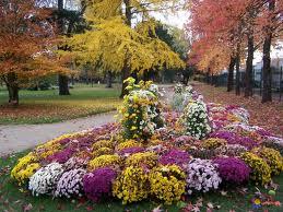les fleurs d 39 automne plus beaux jardin et fleurs. Black Bedroom Furniture Sets. Home Design Ideas