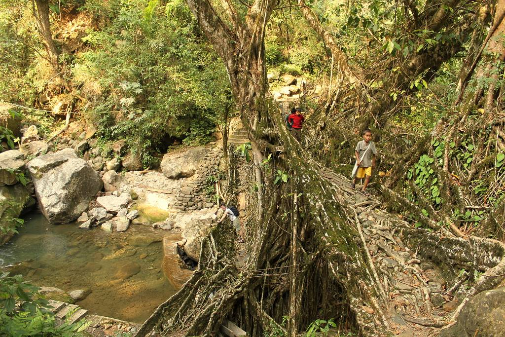 The Living Root Bridges Of India Kuriositas