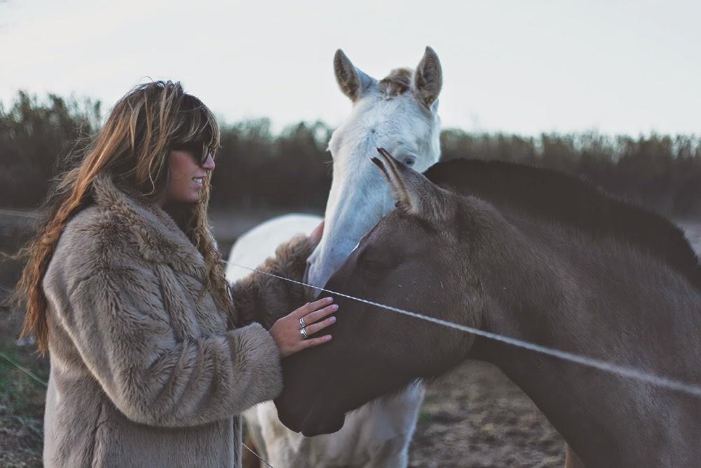 fringeandfrange horses