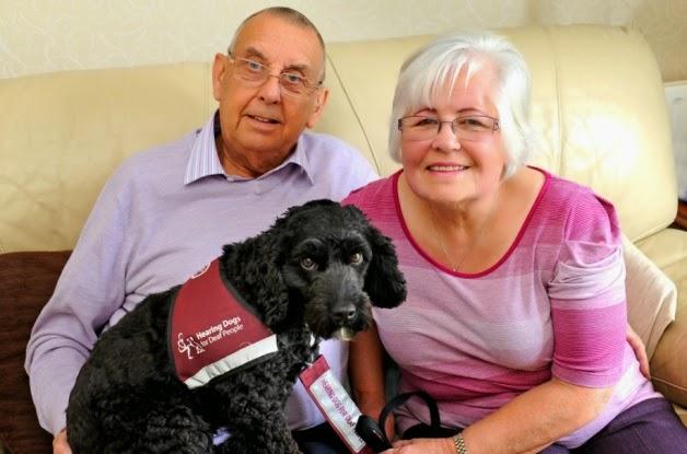 Perros de ayuda a personas con discapacidad auditiva