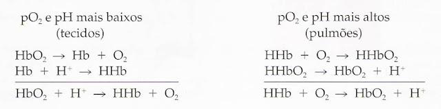 Efeito Bohr