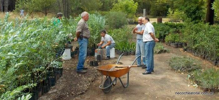 El vivero municipal abastece espacios p blicos y veredas for Vivero municipal