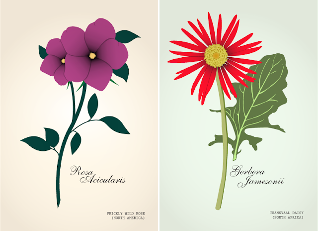 Prickly Wild Rose ( North America) and Transvaal Daisy ( South Africa) Illustrations