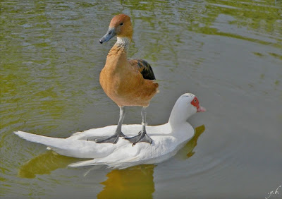 anh dep chia se facebook, anh dep cac loai dong vat, anh dep cac loai chim, anh dep nhat ve cac loai chim, khoanh khac dep nhat cua cac loai chim