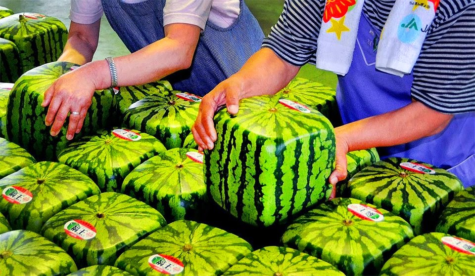 Square Watermelons in Japan