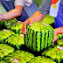 There are Square Watermelons in Japan