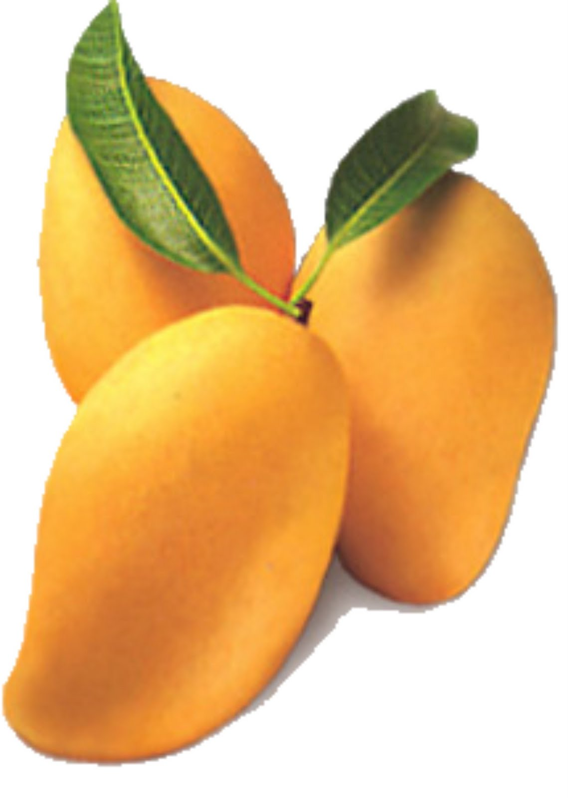 flower induction in carabao mango