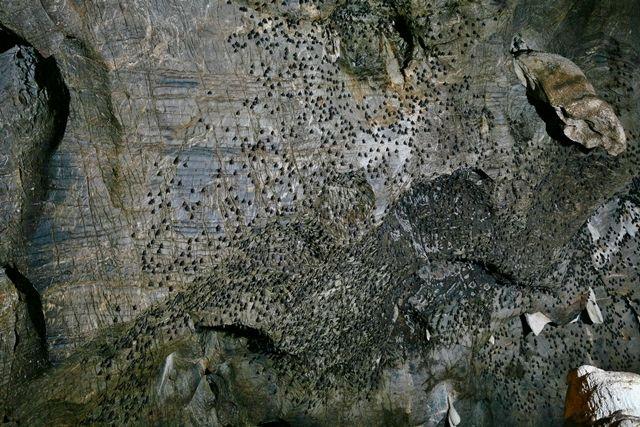 Cueva-murciélagos-Khao-Yai-Tailandia