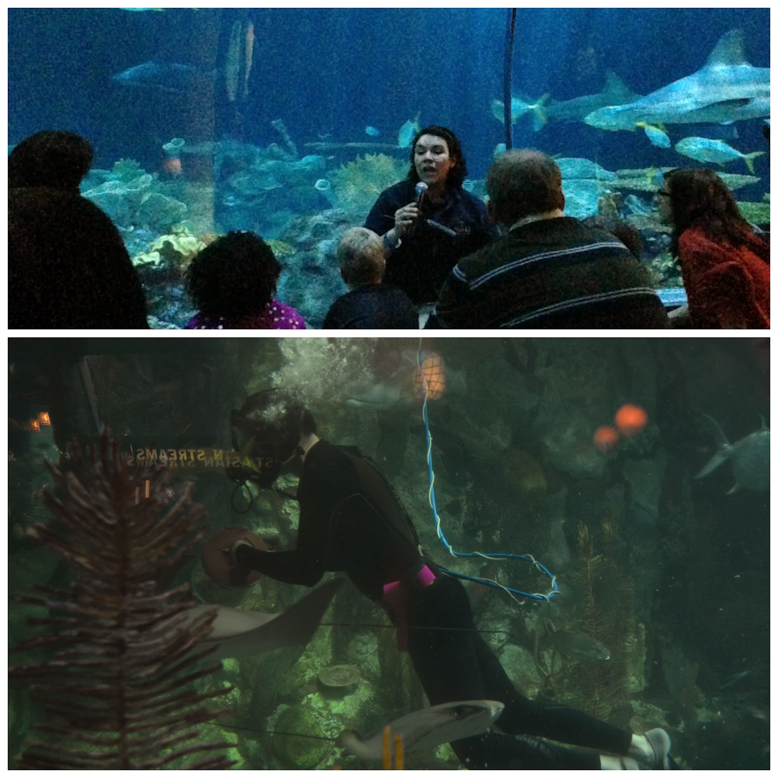 Trainer and Diver Chats at Shedd Aquarium in Chicago