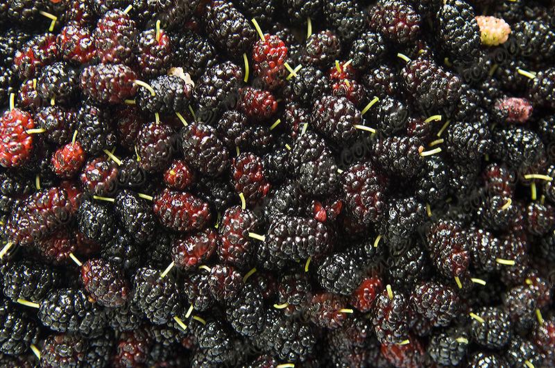 Mulberry Jam makes 9-8 oz. jars