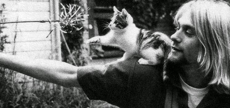 Anak kucing bermain di bahu